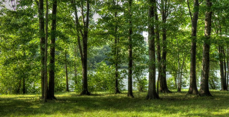 ompark_trees